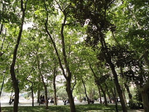 """Türkiye'de parklar """"cetvel artığı"""" mantığıyla yapılıyor,karayollarının yanındaki refüjleryeşil alan oluyor"""