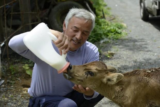 Fukuşima'da, radyasyonlu bölgede kalan hayvanlara bakan adam, Naoto Matsumura ile tanışın