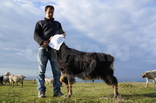 Keçiden de inatçı rant: Üçüncü havalimanı arazisine giren keçinin sahibine 7 bin lira ceza!