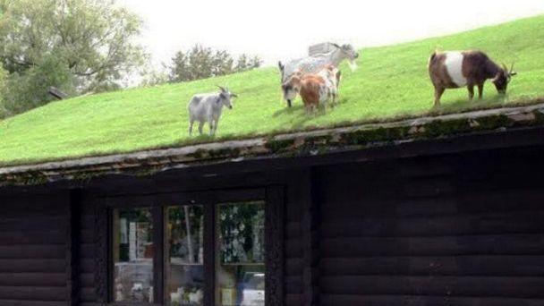 """Fransa'da ticari bina çatılarına """"yeşil olma"""" şartı"""