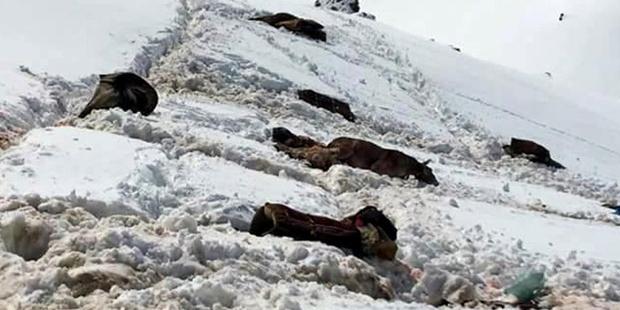 Roboski'de katırlar kaçakçılıkta kullanılıyor diye öldürüldü!