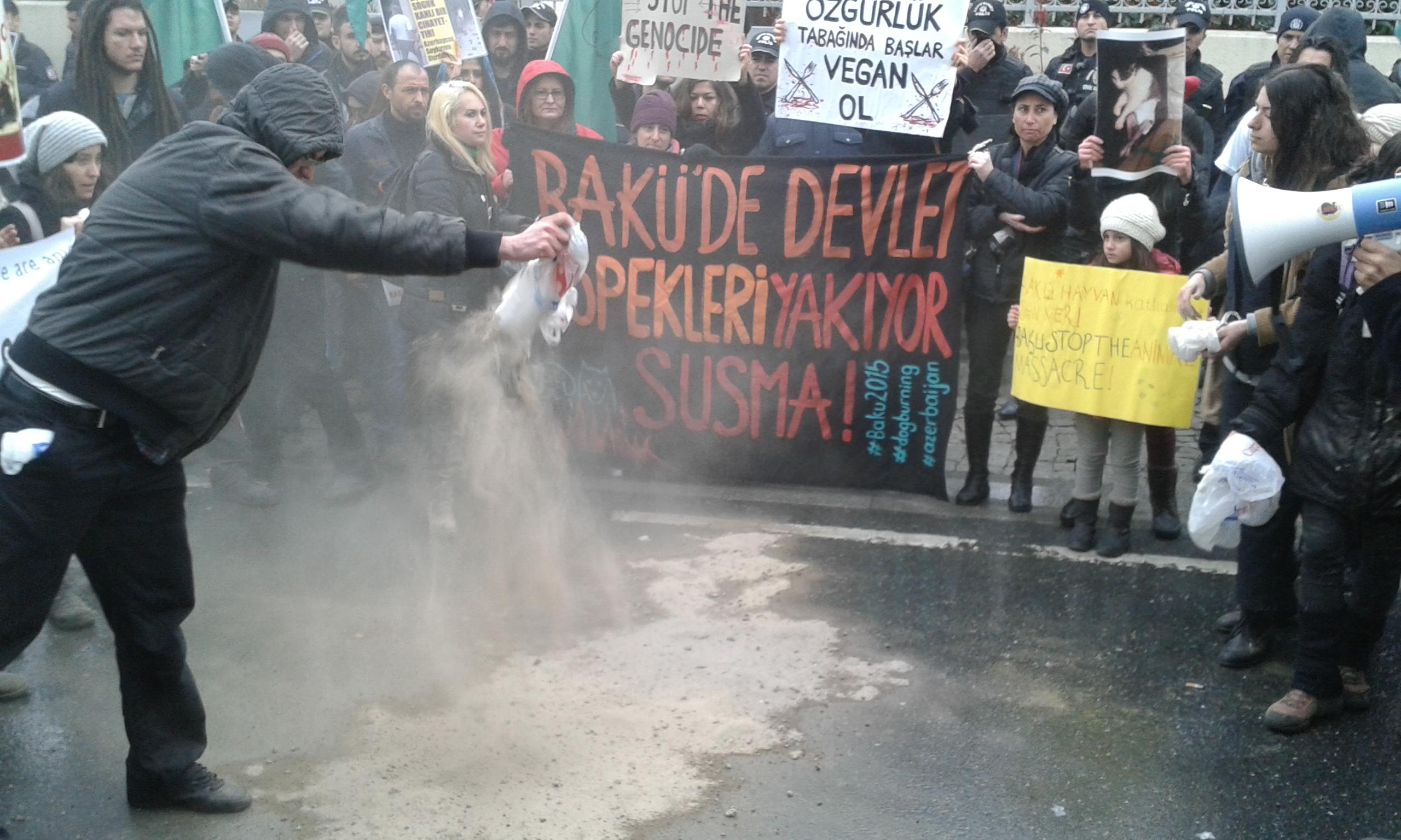 Azerbaycan'daki köpek katliamı protesto edildi