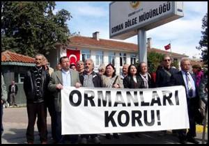 Antalya'da sedir ağacı katliamına siyah çelenk