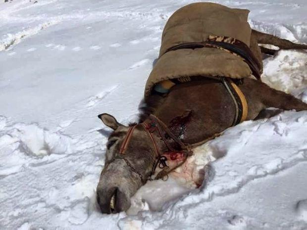 Roboski'de öldürülen katırlar ve köpeğe işkence eden askerler hakkında suç duyurusu