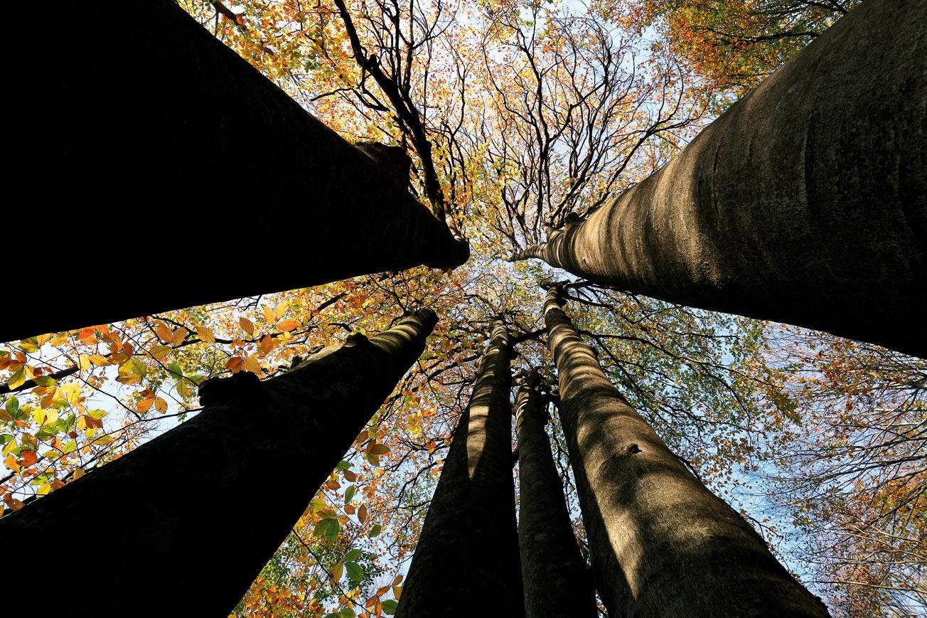 Kuzey Ormanları'nı kurtarmak için geç değil: 250 milyon ağaç yaşıyor!