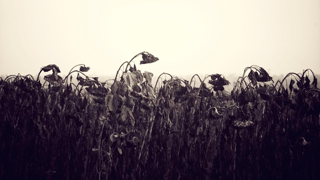 Fukuşima: Bugün sana, yarın bana, sonrasında hepimize