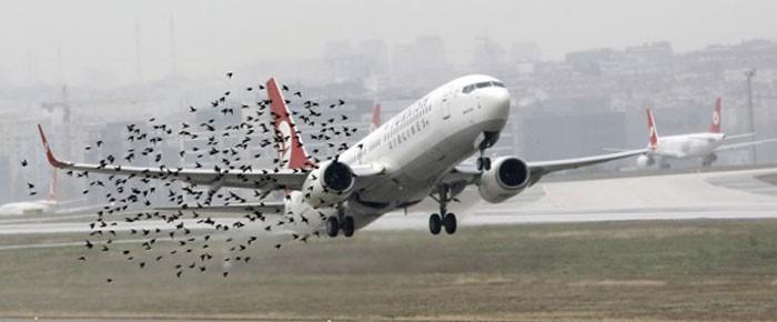 'Kuşları eğitiriz' iddiasına yanıt: Göç yolları değiştirilemez