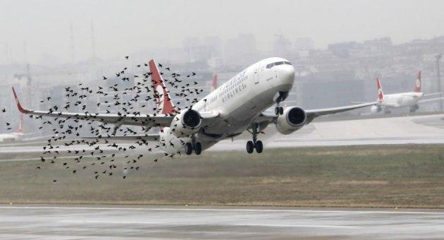 Kuş rotasını sinyalle değiştirme projesine tepki