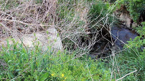 TRT atık suyunu İmrahor Vadisi'ne boşaltmış