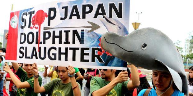 Uluslararası baskı Japonya'ya geri adım attırdı: Yunus katliamı yaşanan Taiji koyuna ambargo