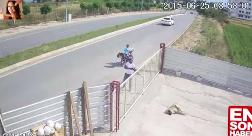 Edirne'de köpeği av tüfeğiyle öldüren saldırgan serbest: Oruçluydum, beni günaha soktu