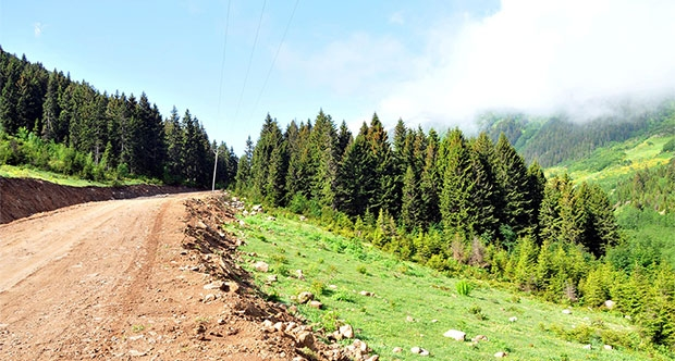 TEMA Vakfı: Yeşil Yol durdurulsun