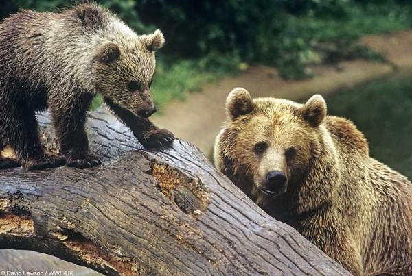 WWF Çevre Günü için açıkladı: Acil önlem almamız gerekiyor!