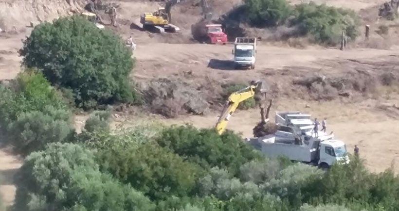 İzmir Büyükşehir Belediyesi, zeytin ağacı sökmekten vazgeçmedi