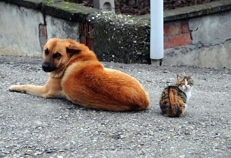 İspanya'da evcil kedi ve köpeklere insanların sahip olduğu haklar tanındı