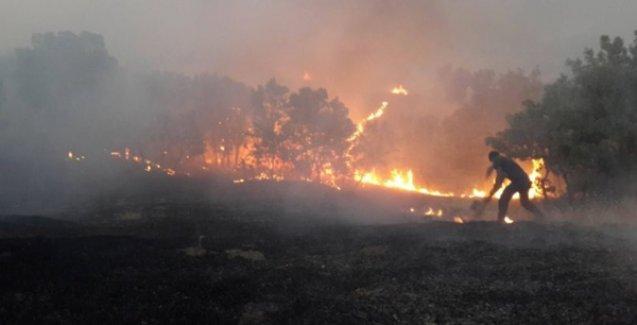 Lice'de yangın kontrol altına alındı