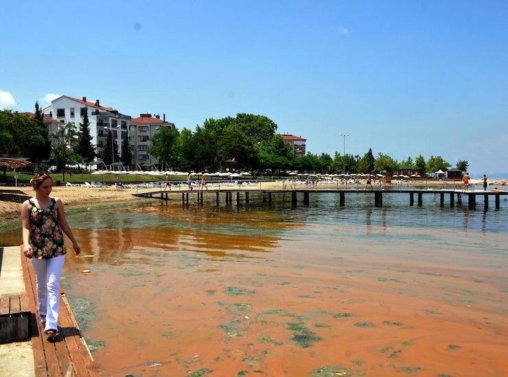 Bu da 'alg operasyonu': Mavi bayraklı plaj iki yılda karardı