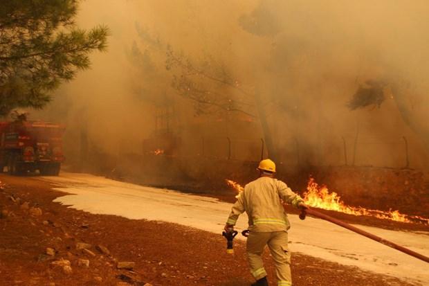 Cudi'den Avşa'ya Türkiye'nin ciğerleri yandı: 150 futbol sahası kadar alan kül oldu