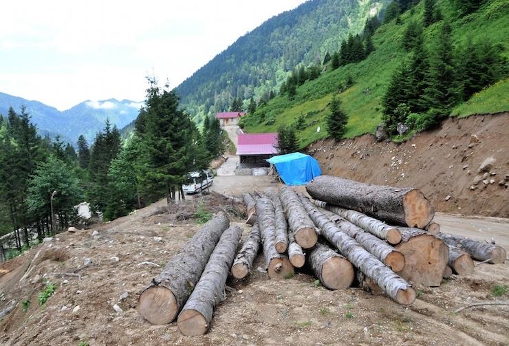 Köylüler, 'Ağaç kesildiyse gereğini yaparız' diyen Rize Valisi'ne seslendi: 'Gereğini yap!