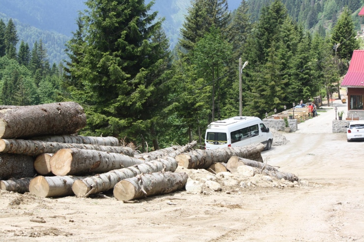 Rize Valisi 'Bir tane bile kesmedik' demişti: 'Yeşil Yol' için yüzlerce ağaç kesilmiş
