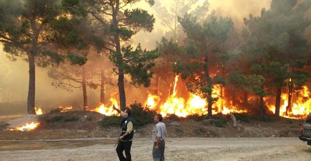 Mersin'de Akkuyu Nükleer Santrali arazisinin yakınında orman yangını çıktı