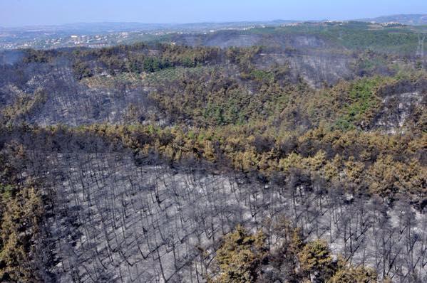 Bursa'daki orman yangınının ardında '50 bin konutluk proje' şüphesi