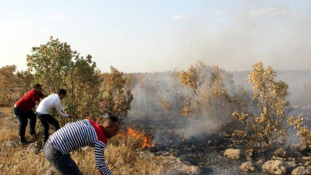 Tunceli ve Nusaybin'de orman yangınları
