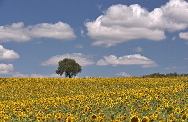 Tekirdağ'da tarım arazileri Katar'a satılacak