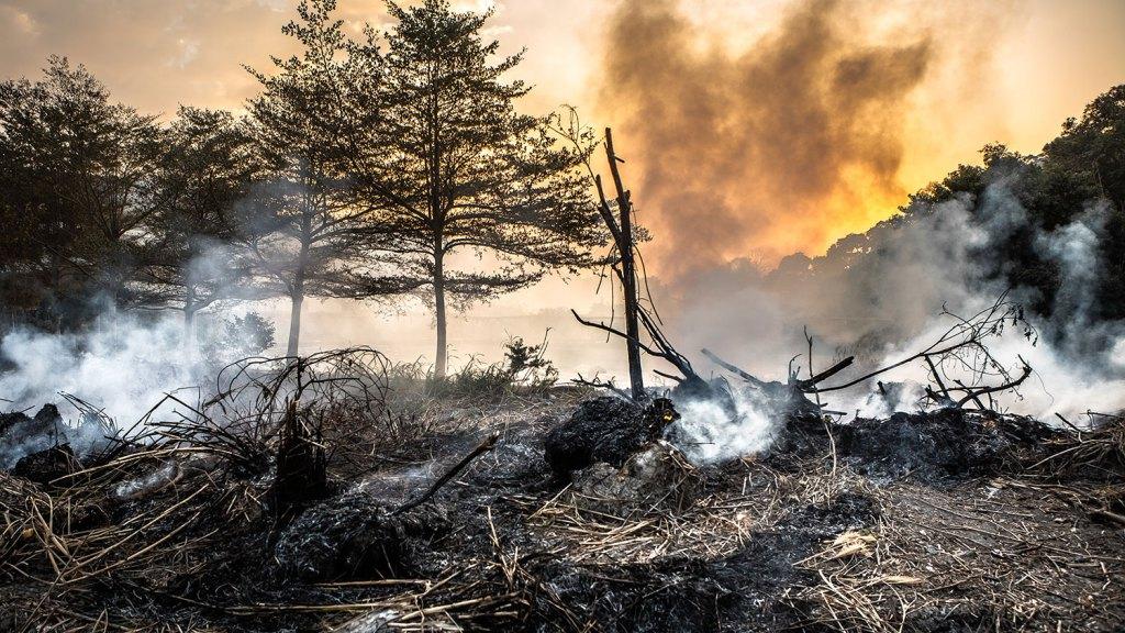 Ormanları yok edecek kısır döngü: İklim değişir orman yanar, orman yanar iklim değişir