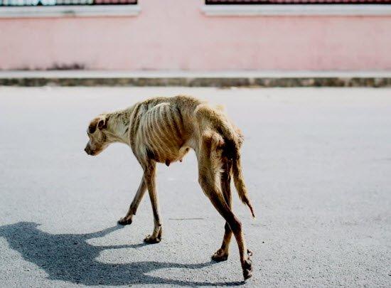 Dört Ayaklı Şehir'in Pendik Köpek Havzası izlenimleri