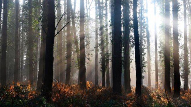 Dünyada toplam kaç ağaç var dersiniz?