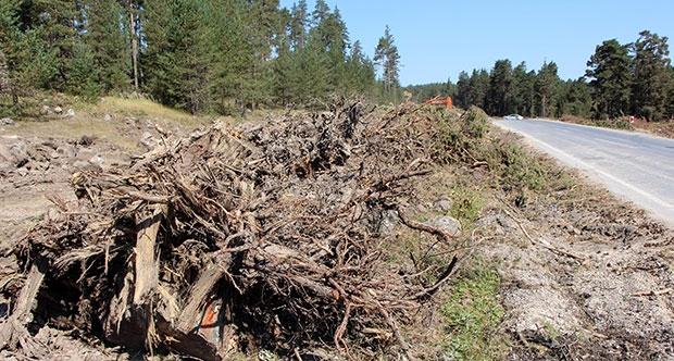 Bolu'da ağaçlar yola kurban edildi