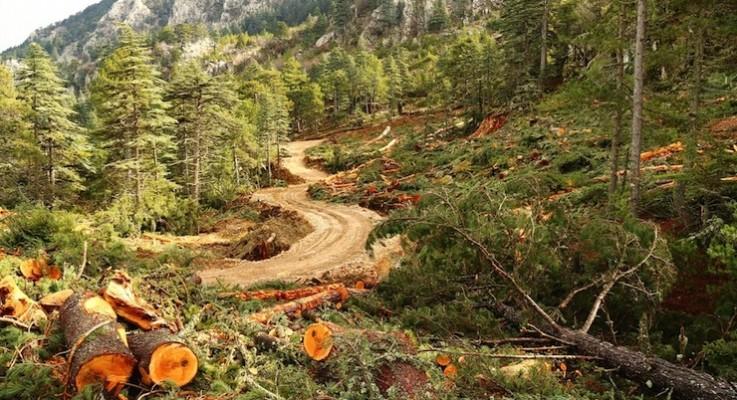 Ekizce'de 800 yıllık sedir ağaçlarının kurban edildiği mermer ocağına durdurma
