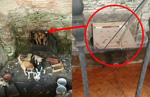 Beyazıt Hamamı'nda köpekler 8 aydır mahsur!