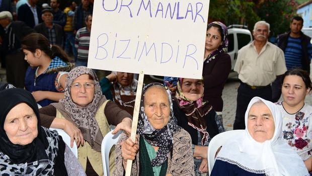 Çam balı ile ünlü Dereköy'de, RES için ağaç katliamı tepkisi