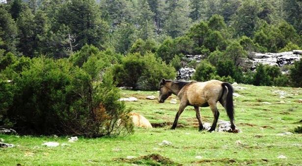 Isparta'da ardıç ormanlarına mermer ocağı