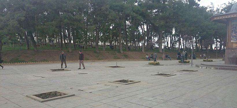AKP mitingi için ağaçları söktüler!