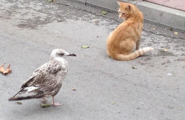 Hayvanlar günü bu ihlallerle kutlu olamıyor