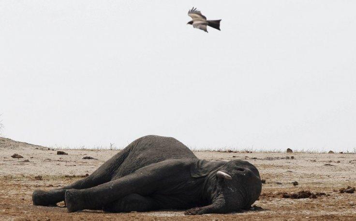Filleri siyanürle katlediyorlar