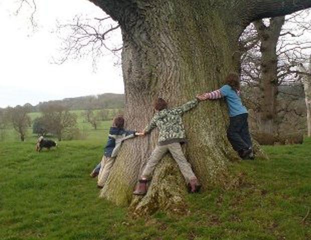 Ağaçlara sarılarak onları koruyan cesur yürekliler