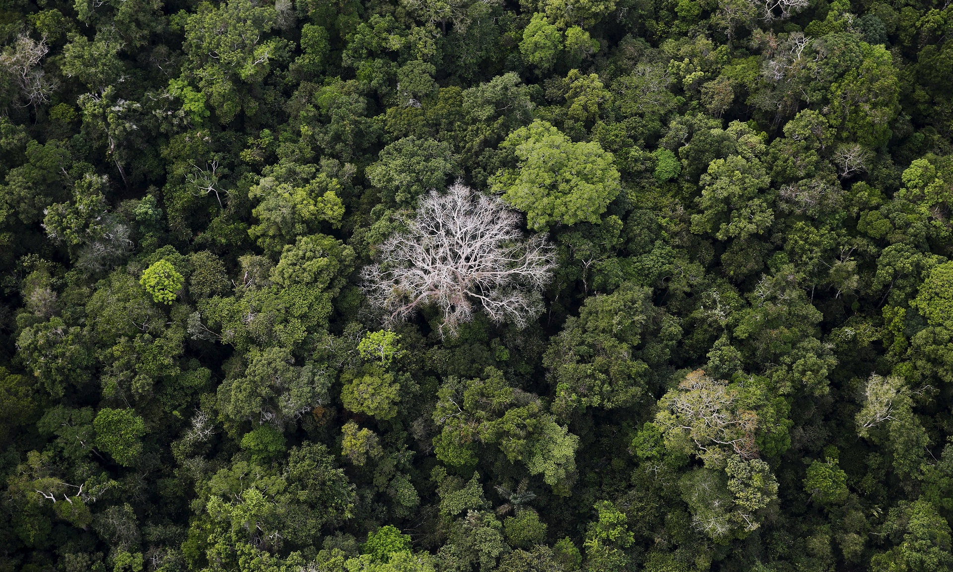 Gezegenin akciğerlerine darbe: Amazon ormanları yok olma tehlikesinde