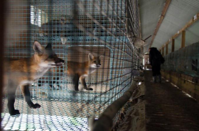 Bir hayvanı özgürleştirmenin mutluluğu: ALF içinizde