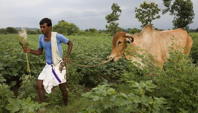 Hindistan'da köylüler neden intihar ediyor?