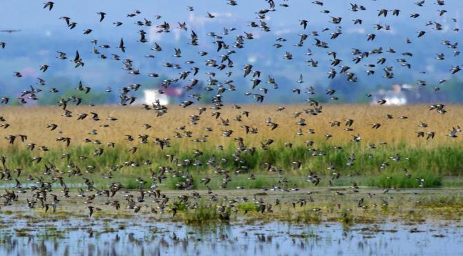 Su kuşlarının nesli tehlikede