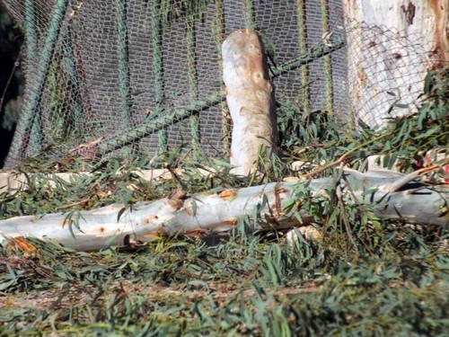 Adana'daki izinsiz ağaç kesimine avukatlardan suç duyurusu