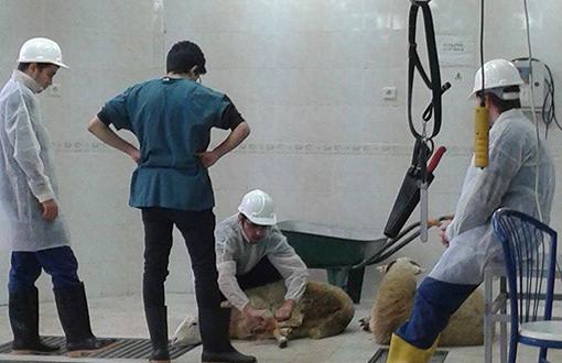 """Veganlar, Veterinerlik Fakültesinde """"Hayvan Kesim Dersini"""" Bastı"""