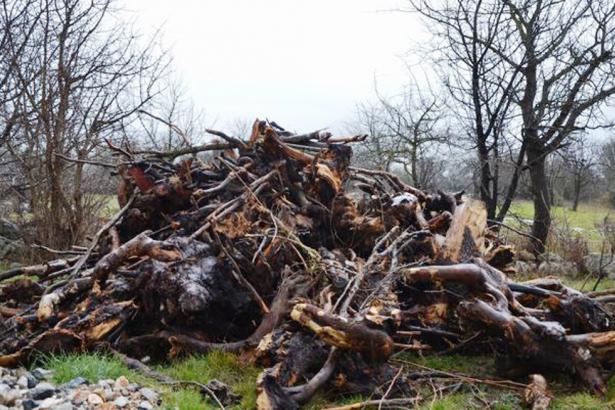 Muğla'da zeytinlik katliamı: 80 bin ağacı katlettiler