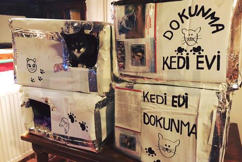 Amasya'da sokak kedilerine ev yaptılar, sağolsunlar…