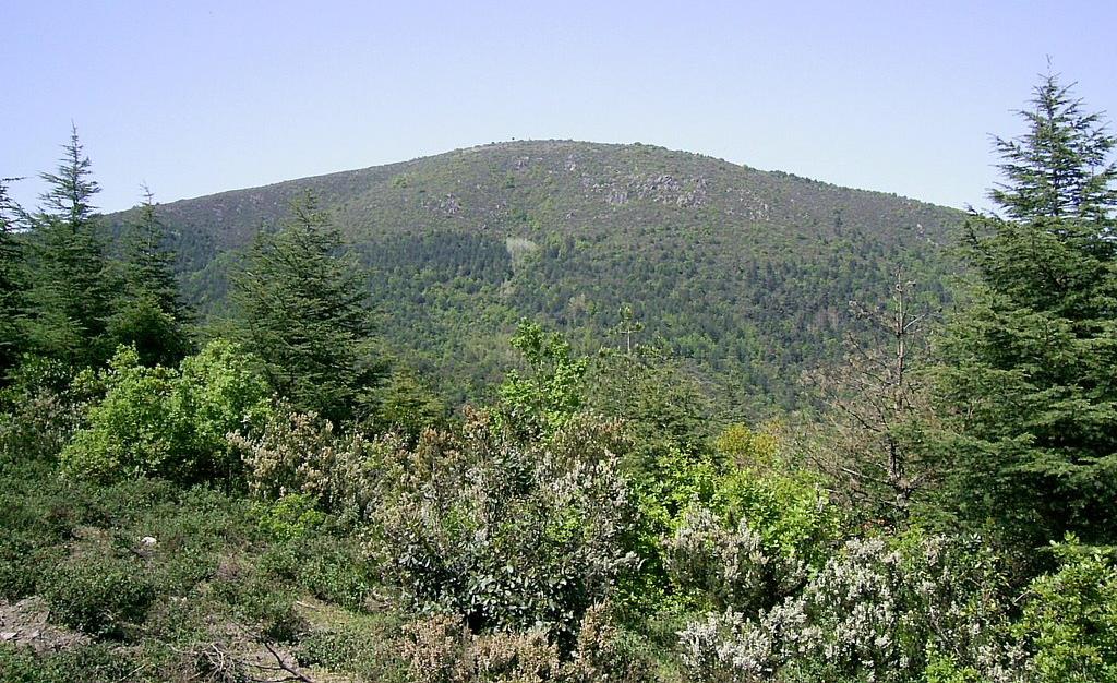 Ne etti size bu Kuzey Ormanları! Kocaeli Çene Dağı'nda çöp tesisinin işi ne?