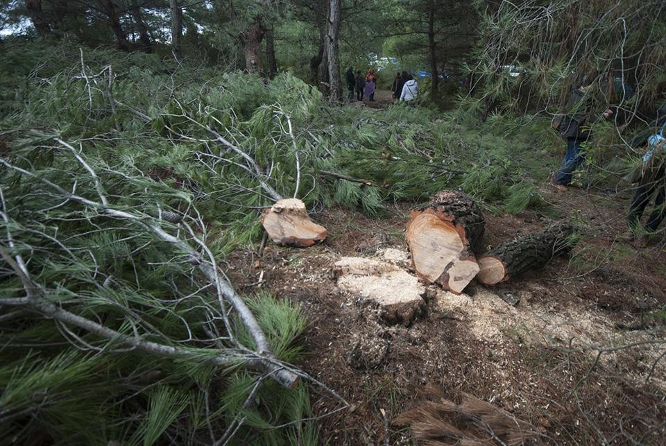6 RES direği için 1800 ağacın kesimine yargı 'dur' dedi. Kararı beklemeden katlettiğin 1000 ağaç ne olacak #SancakHolding ?